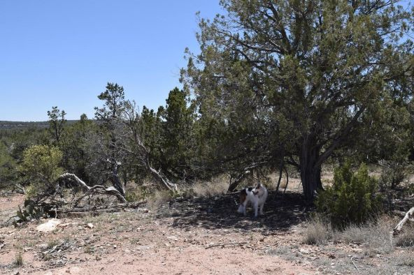 487 Sierra Verde Ranch, Seligman, AZ 86337 Photo 19
