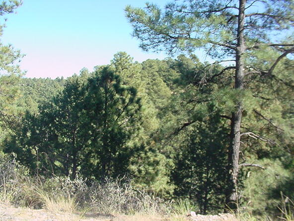 139 Twin Tree, Alto, NM 88312 Photo 14