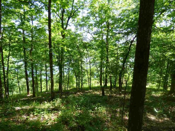 12 Ac Charlie Stover Rd., Royal, AR 71968 Photo 7